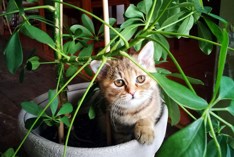 cat indoor plant